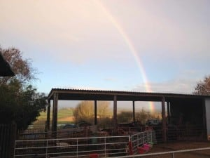 The new barn, apparently somewhere in there is a pot of gold! still looking!